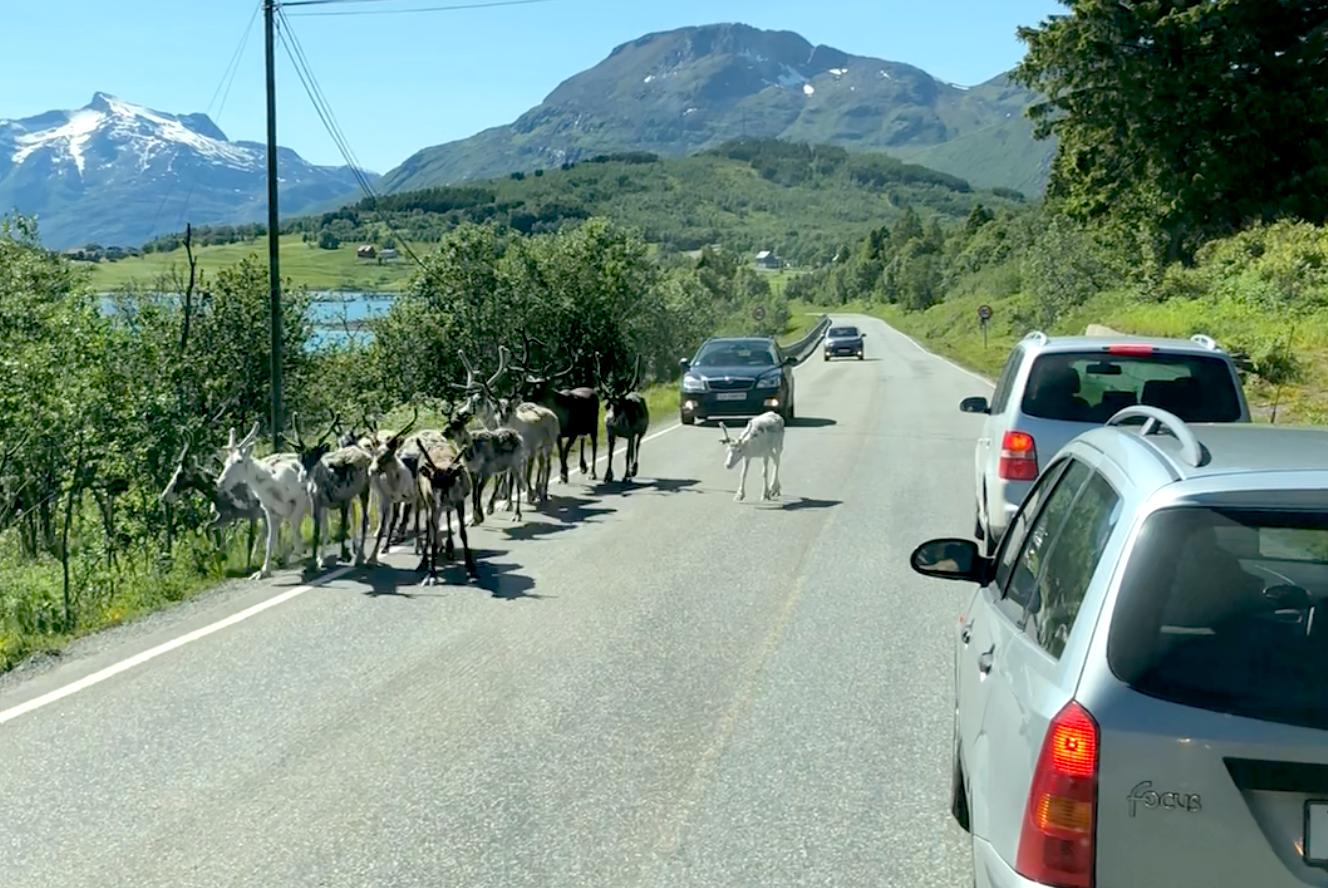 3 Tur til Lofoten-1