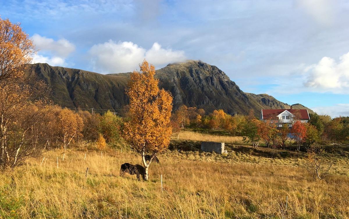 Harstad - Lofoten 50.jpg