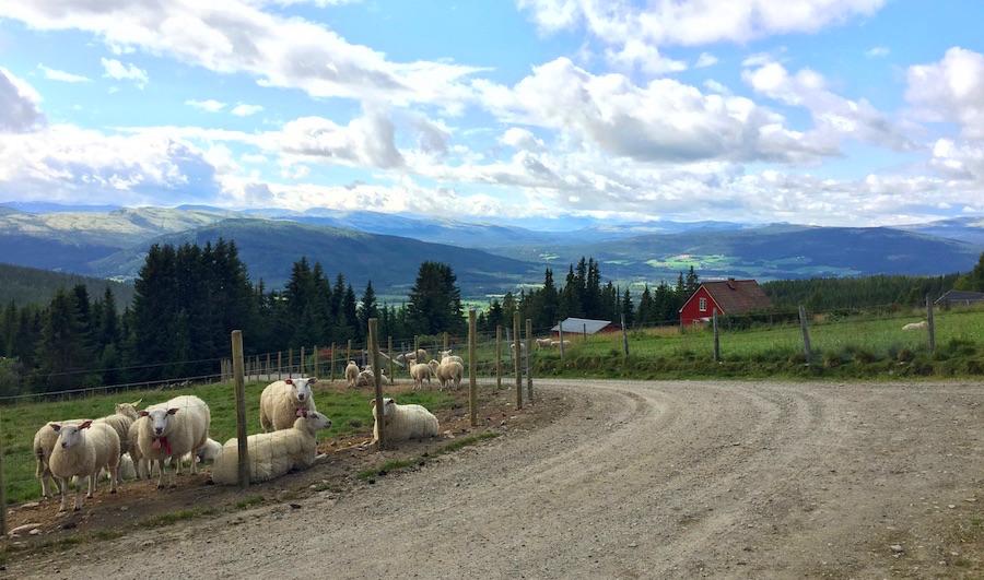 Alvdal - Gudrnadsdalen 17