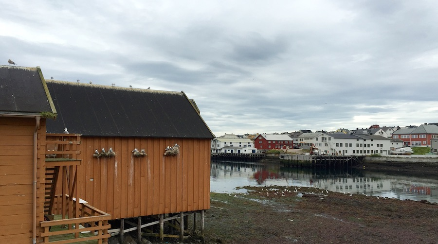 Batsfjord:Hamningberg 23