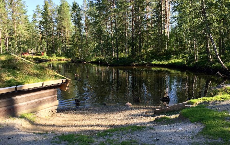 Namsskogan - Steinkjer 8