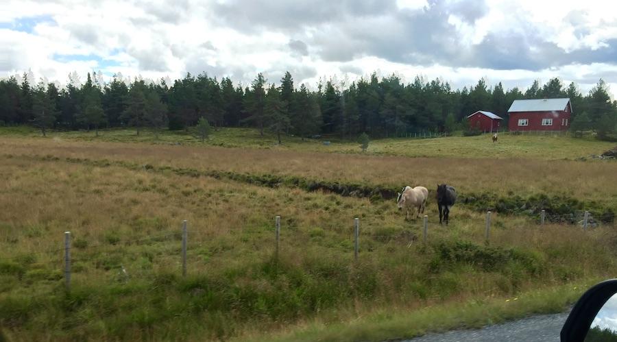 Varldres - Telemark 2