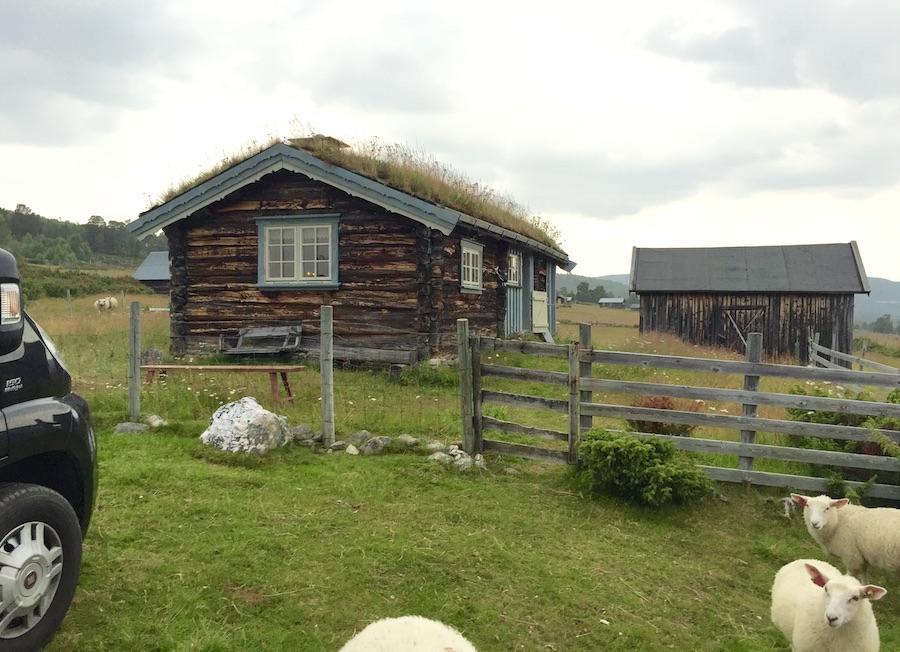 Ferda sine turtips i Norge